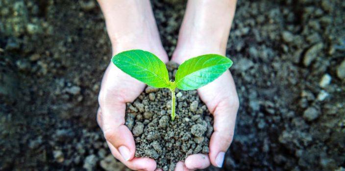 Développement durable : comment faire la différence en entreprise ?
